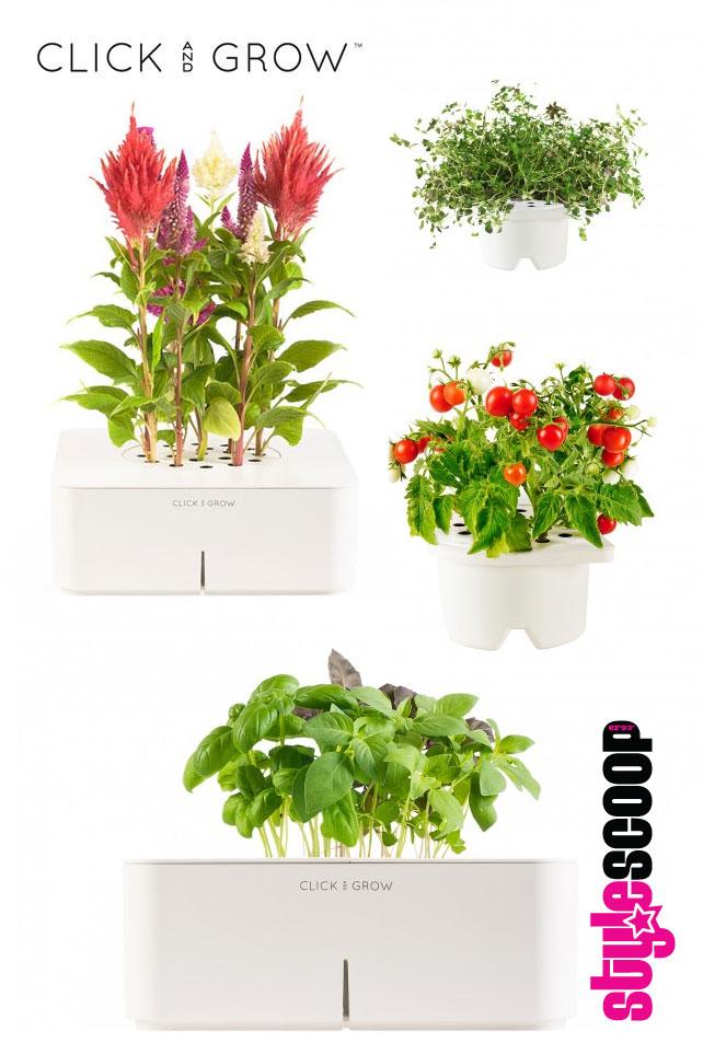 stylescoop-digital-herbs