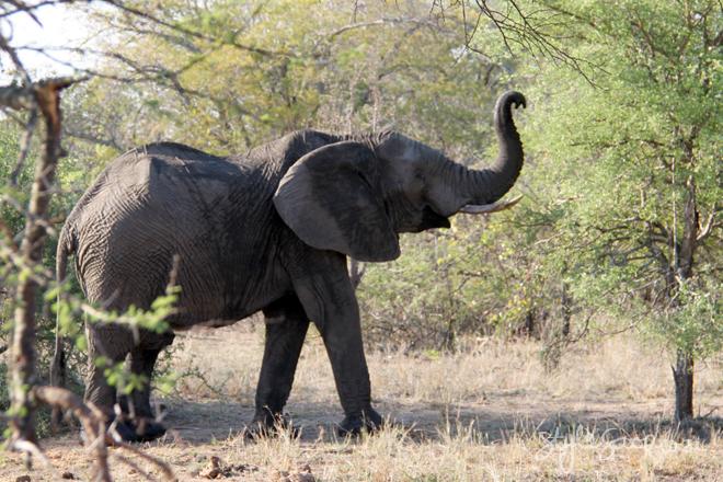 stylescoop-bush-adventure-elephant