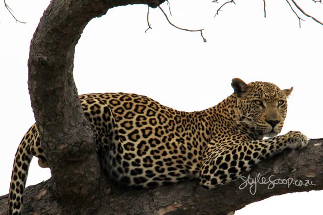 stylescoop-bush-adventure-leopard
