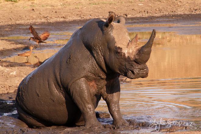 stylescoop-bush-adventure-rhino-2