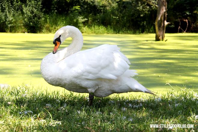irene-dairy-farm-swan