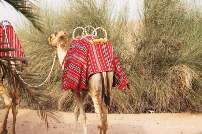 arabian-adventures-2