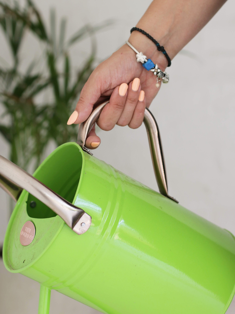 Looking after your houseplants. These Gadgets Will Change the Game